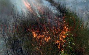 incendi_pendici_etna