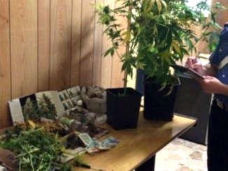coltivavano_in_casa_stupefacenti