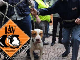 combattimento_cani_polizia_LAV