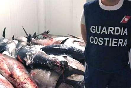 guardia_costiera_sequestro_tonno_rosso
