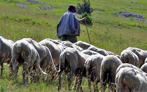 Pastore cade nel burrone e muore