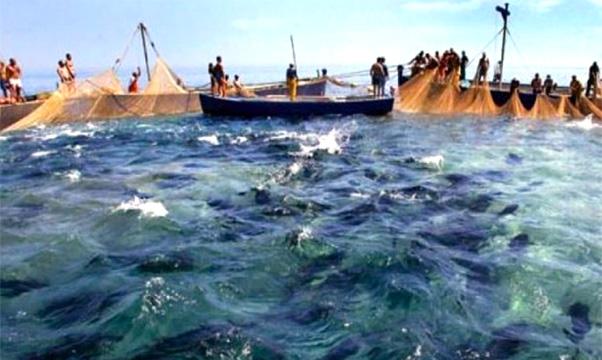 Politica siciliana litiga sul tonno