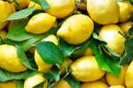 limoni_3