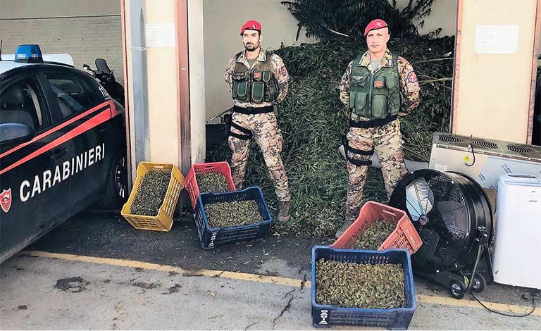Erba nell'aranceto a Paternò, sei arresti