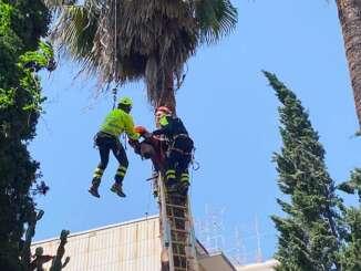 Giardiniere a testa in giù appeso alla palma - video